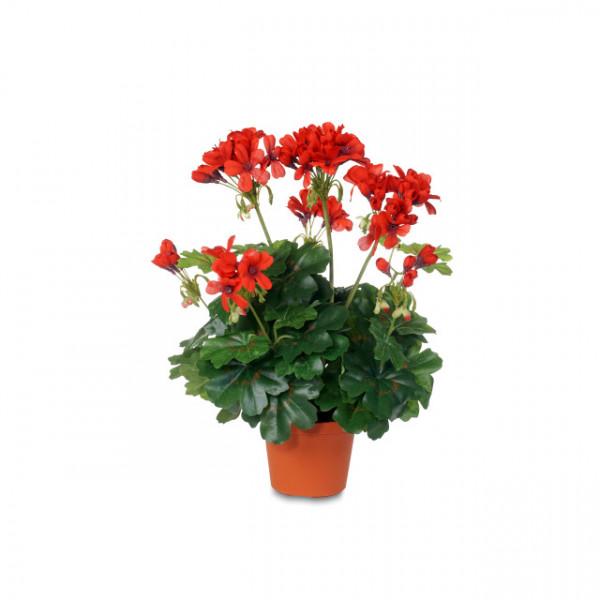"""Geranium """"Cascade"""""""