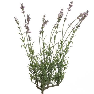 Floratexx Lavendelbusch