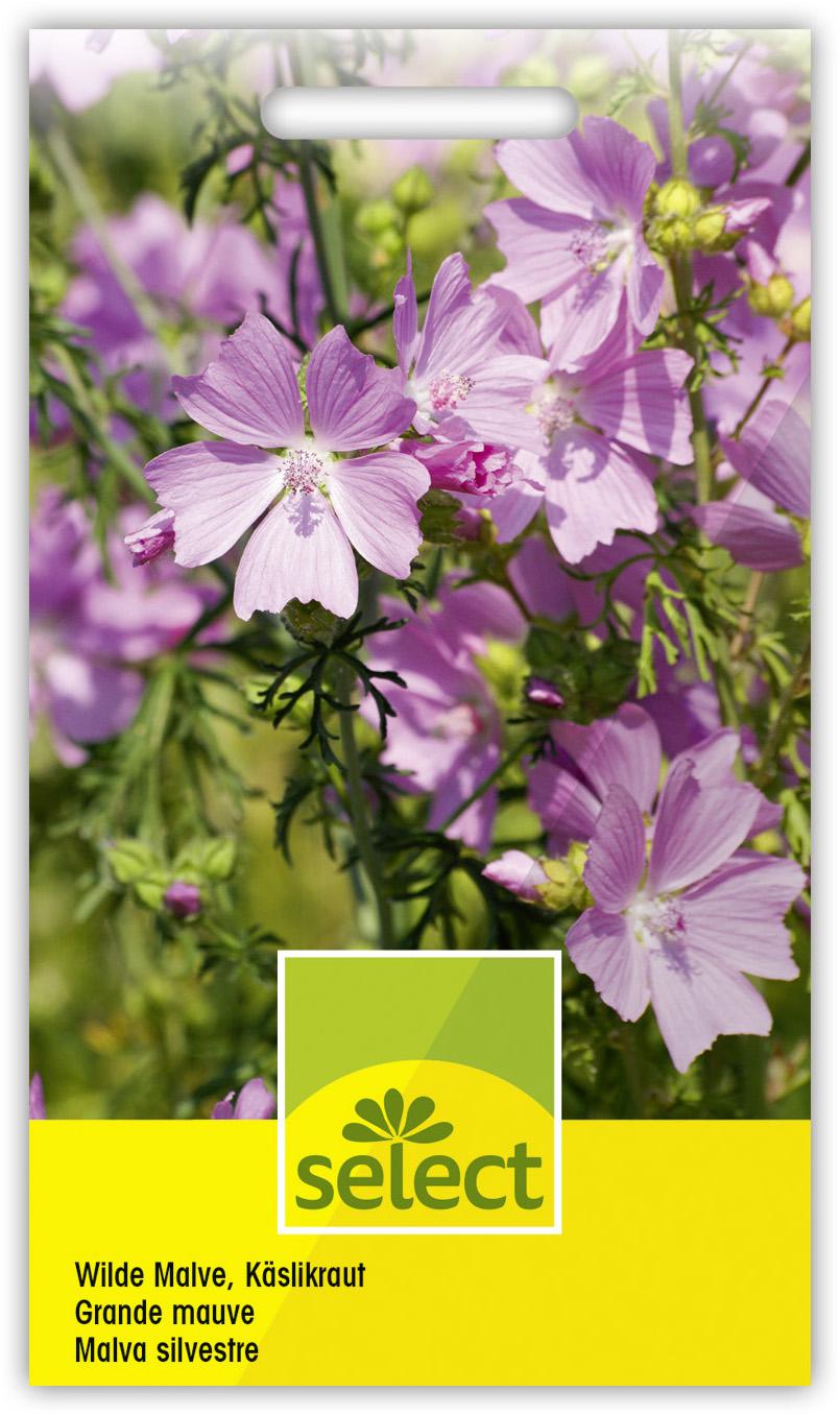 Malva sylvestris WILDE-MALVE über 200 Samen Bienenweide