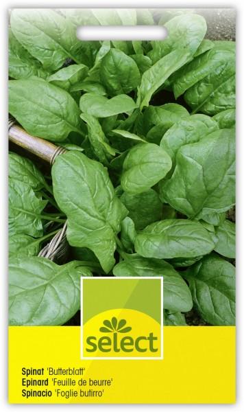 Spinat 'Butterblatt' Frühjahr und Herbst - Vorderseite