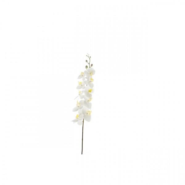 Phalaenopsis-Trieb