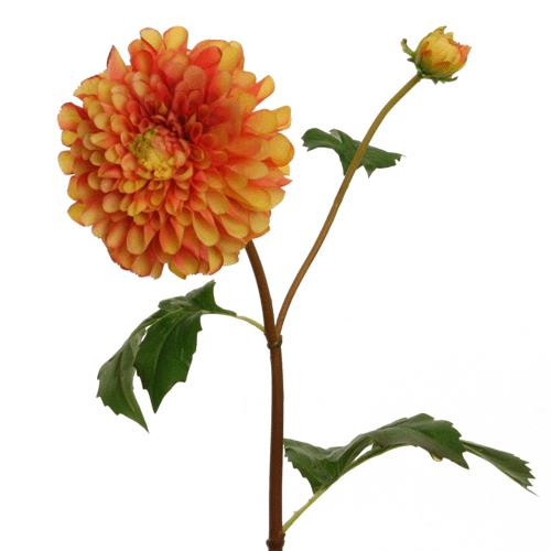 Floratexx Dahlie