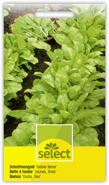 Schnittmangold 'Gelber feiner' - Beta vulgaris L. var. cicla