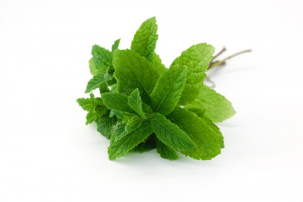 Spearmint Minze 'Spearmint' - Mentha spicata