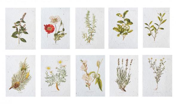 Seedpaper Kartenset Enzyklopädie