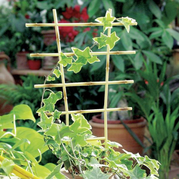 Pflanzengitter Bambus