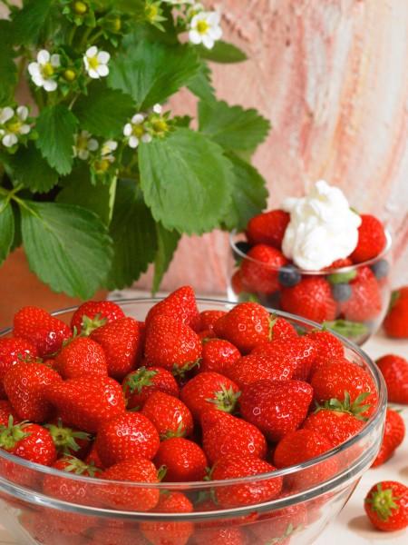 Erdbeere 'Fraroma' - Fragaria ananassa