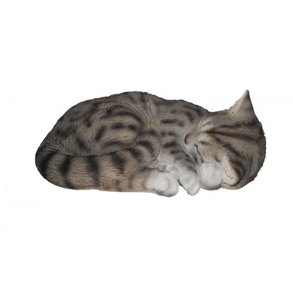 Schlafende Katze