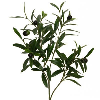 Floratexx Olivenzweig